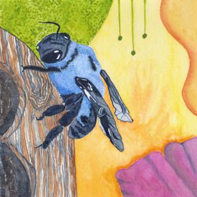 Carpenter Bee, watercolor on 140 lb. cold press paper. © 2013 Sheila Delgado