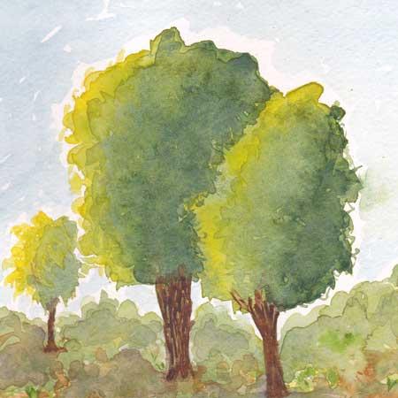 Trees. 5 x 7 watercolor on paper. 2011 Sheila Delgado