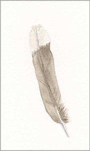 Feather, 3 x 5 in. watercolor on Arches 140 lb. cold pressed paper. © 2018 Sheila Delgado.